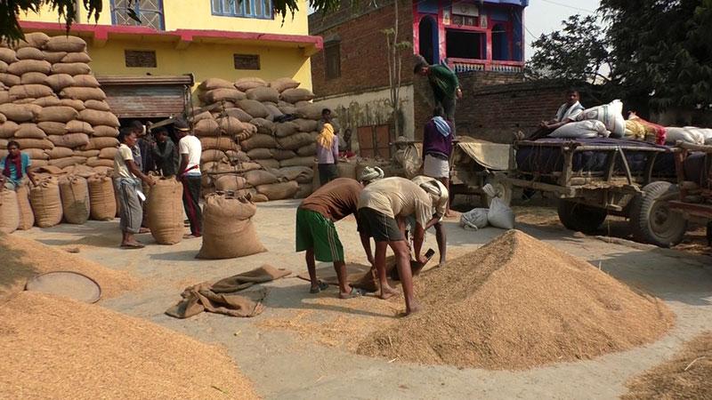 न्यूनतम समर्थन मूल्यमा किसानसँग धान खरिद गर्ने सहकारीलाई अनुदान