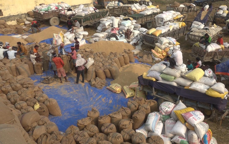 धान खरीद गर्न खाद्यलाई भ्याईनभ्याई, बिक्री गर्न पालो कुर्दै किसान