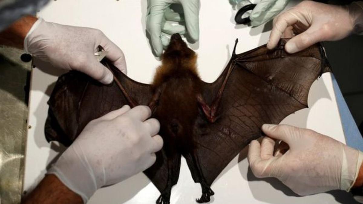 जनावरबाट मानिसमा सर्ने रोगको जोखिम, विज्ञहरुले दिए चेतावनी