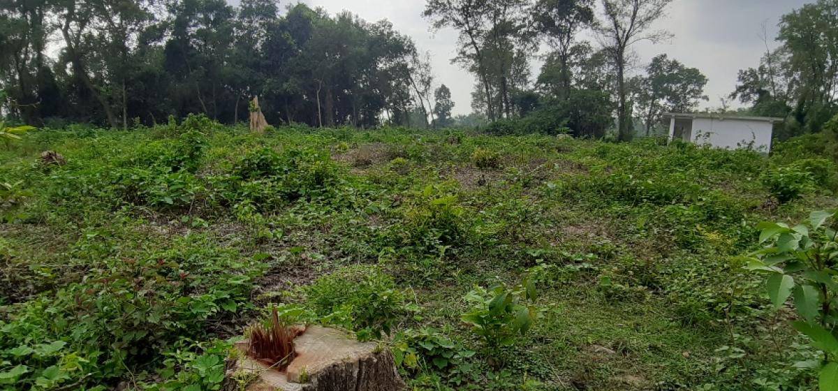 स्वीकृति नै नलिएर बैजनाथमा अवैध वन फँडानी