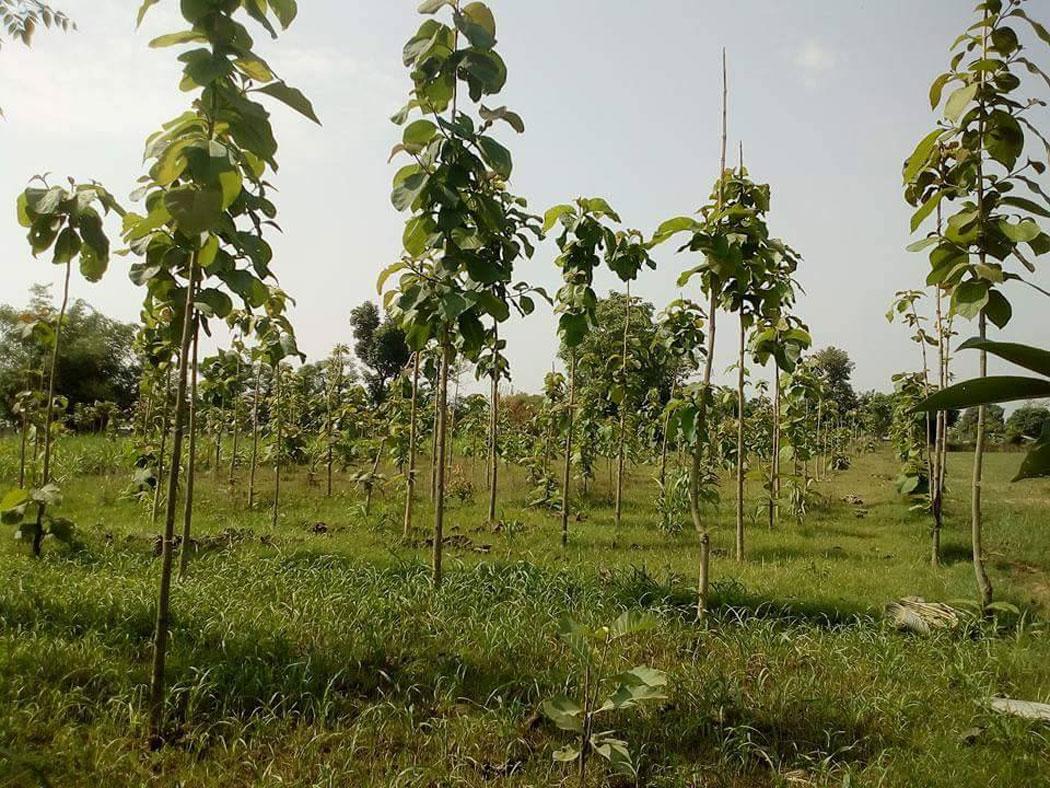 दोहोरो मारमा पारिवारिक निजी वन किसान, कानुनी अस्पष्टता उस्तै