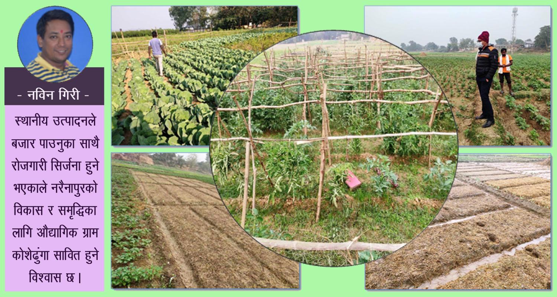 नरैनापुरको प्राथमिकतामा 'कृषि र उद्योग'