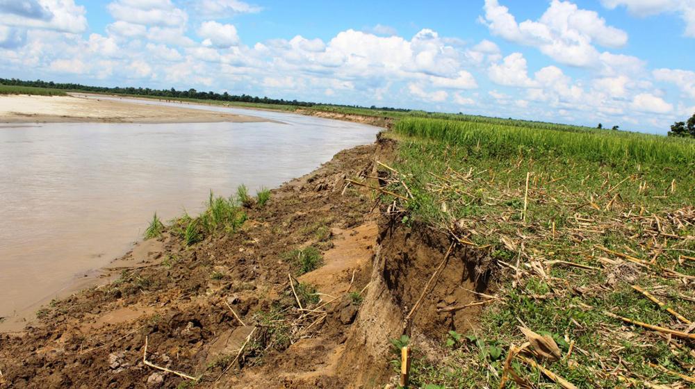 दोदा नदीले उखु र धान रोपेको जग्गा बगाउन थालेपछि स्थानीयवासी चिन्तित
