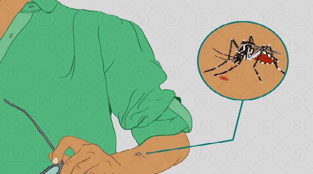 कीटजन्य रोगको उच्च जोखिम, नरैनापुरमा फेरि बढ्यो मलेरिया